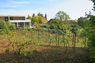 Weingarten im Magdalenengarten