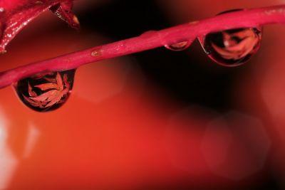 Herbstliches Rot